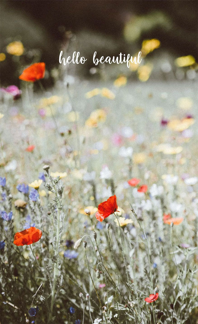 Poppy and wild flower field iPhone wallpaper