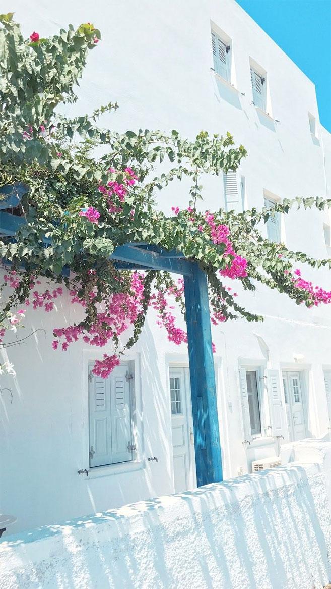 Pink flower on Streets of Santorini iPhone wallpaper