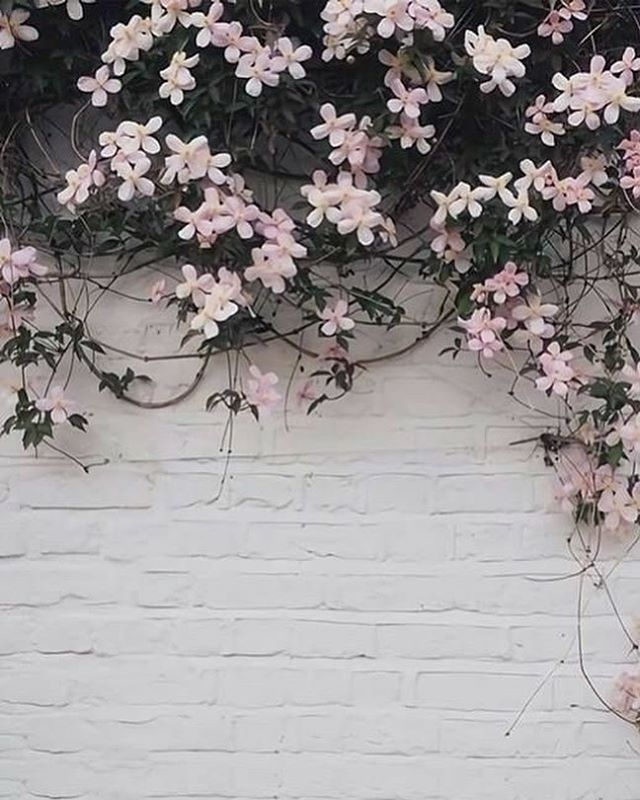 Pretty flower iPhone wallpaper