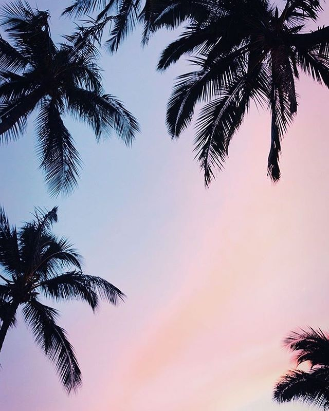 Beautiful sky and coconut trees