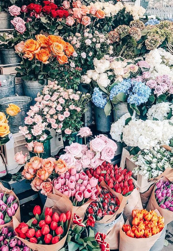 100 Beautiful iPhone wallpaper , iphone background, summer,spring, pretty flower,Flower iPhone wallpaper #pretty #flower