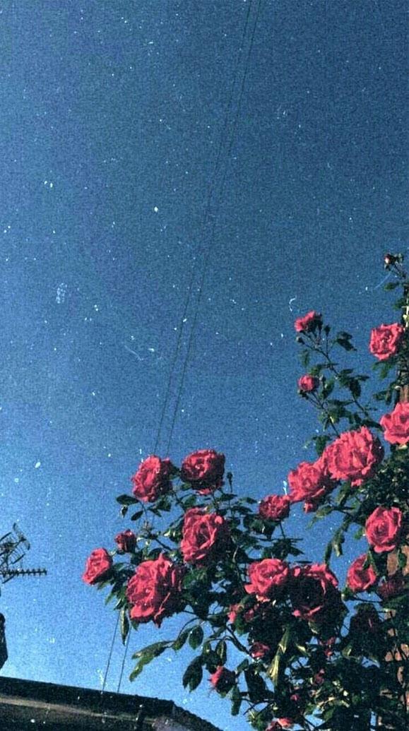 100 Beautiful iPhone wallpaper , iphone background, summer ,flower