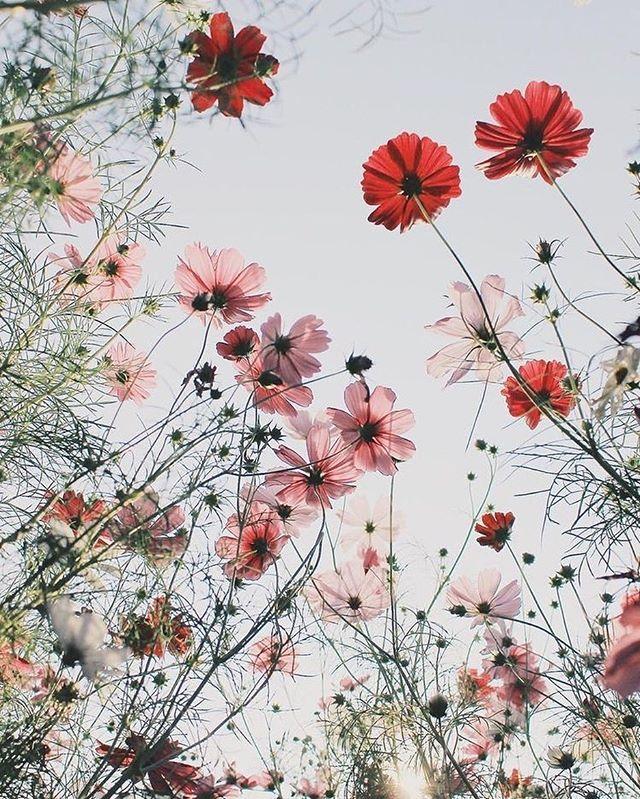 Pretty wild flowers, daisies, poppies
