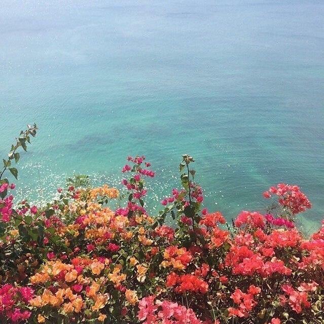 Amazingly beautifully colourful flowers