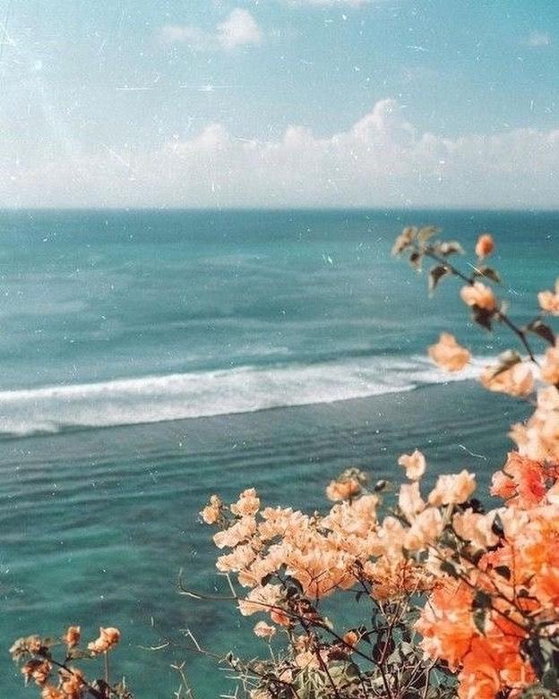 Orange flowers near beach