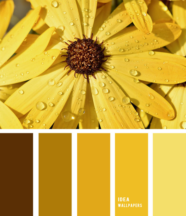 Yellow flower hues Colour Palette 1905212