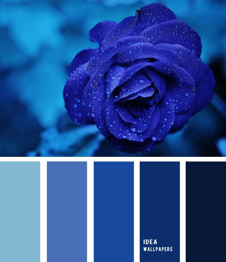 Midnight blue colour palette 1905231