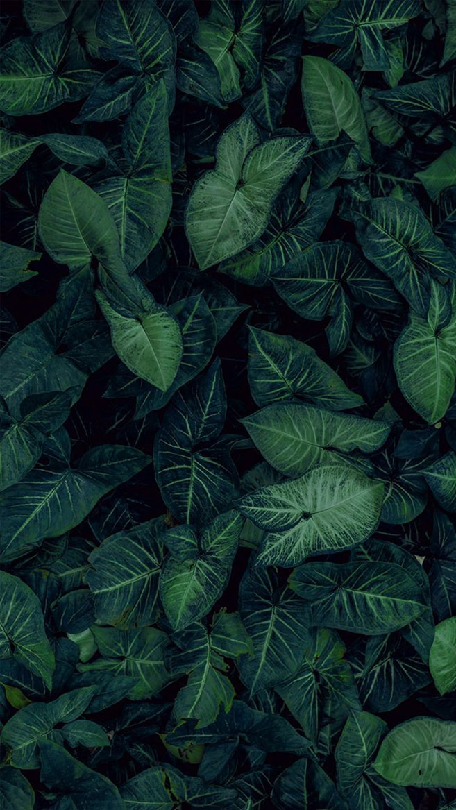 Tropical Leaves, Botanicals, Leaf Phone Wallpaper