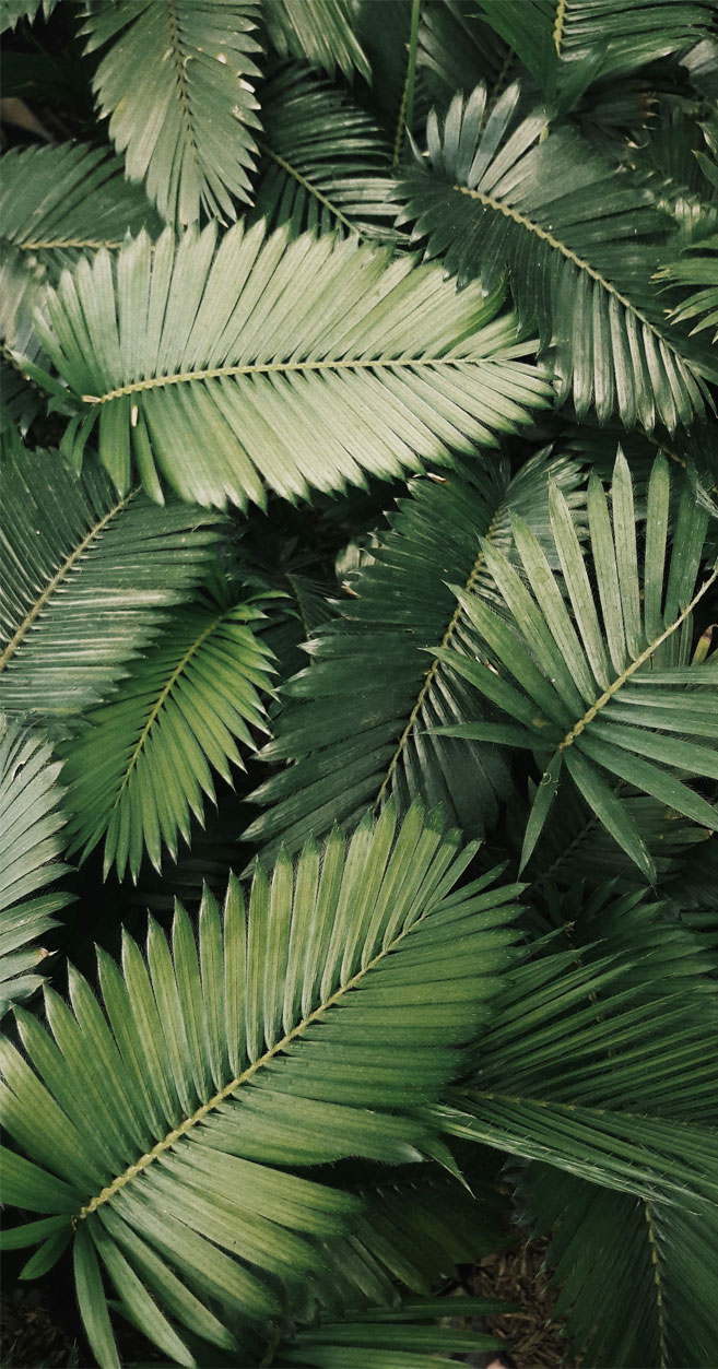 Tropical Leaves Botanicals Leaf Phone Wallpaper Idea Wallpapers Iphone Wallpapers Color Schemes Download this simple blue border, frame, text, simple border png clipart image with transparent background or psd file for free. idea wallpapers