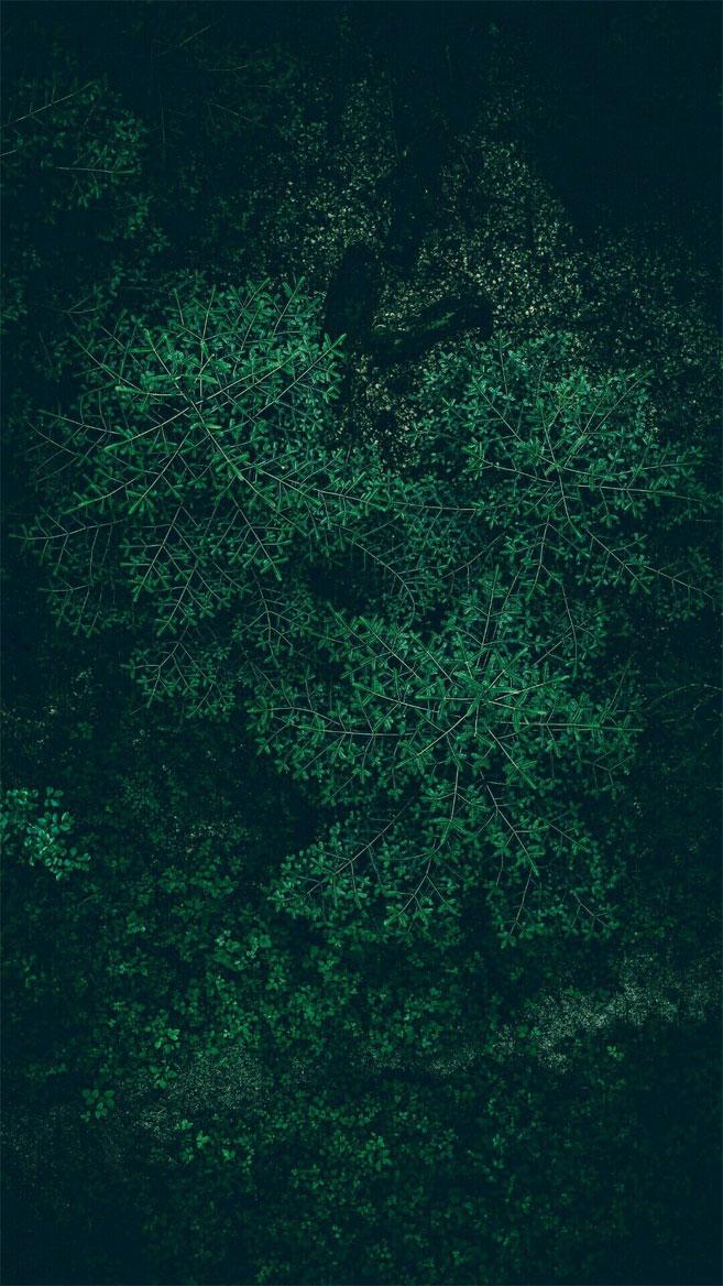 Tropical Leaves, Botanicals, Leaf Phone Wallpaper