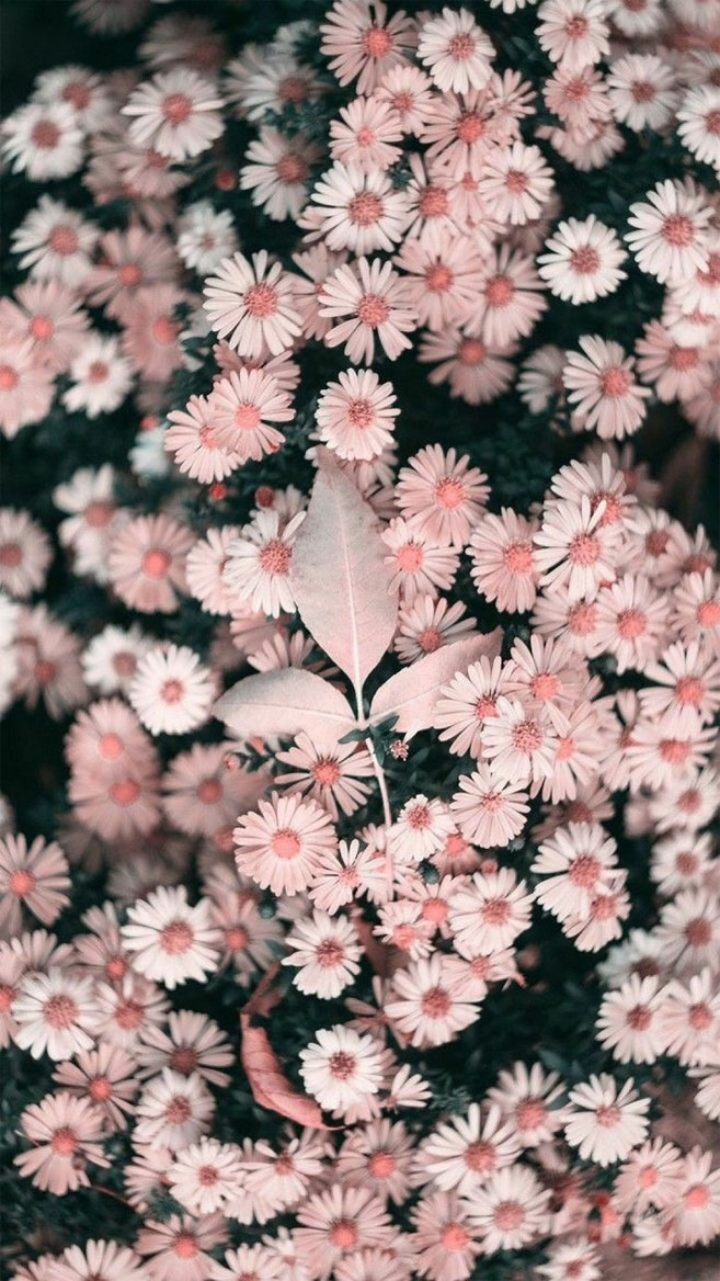 Beautiful flower iPhone wallpaper