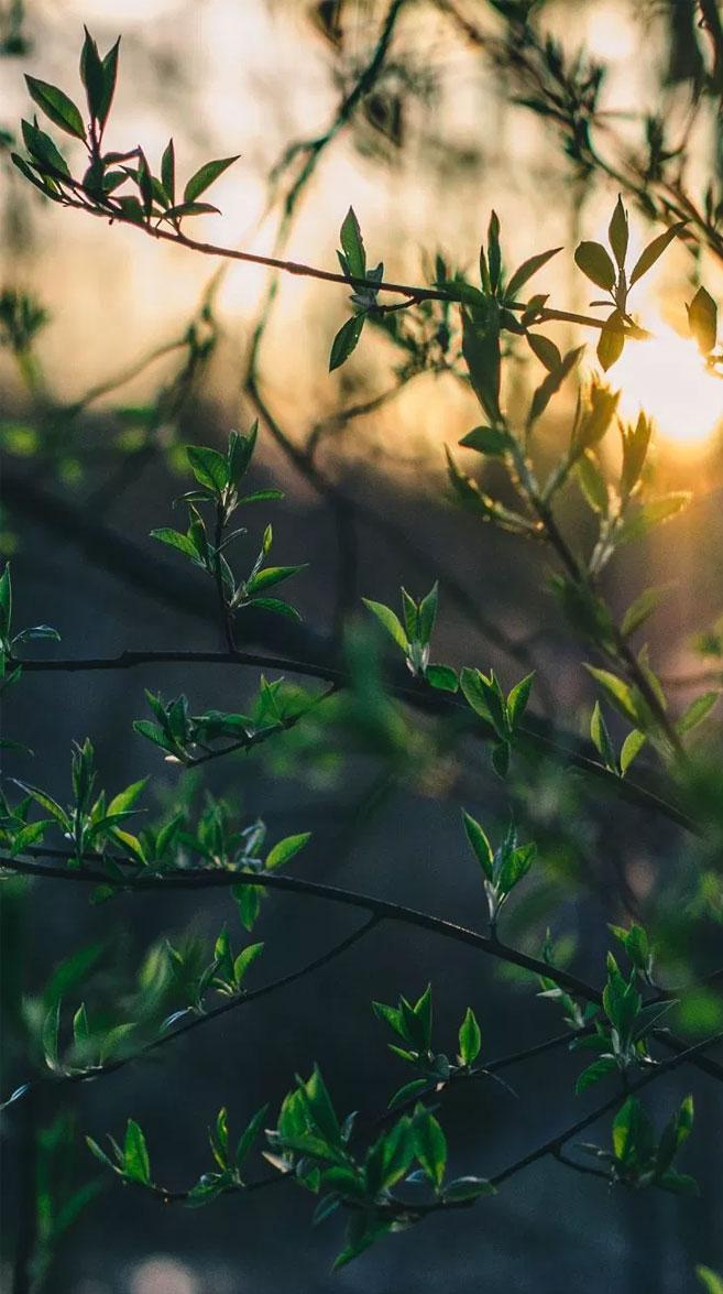 Morning sun light trough Leaves