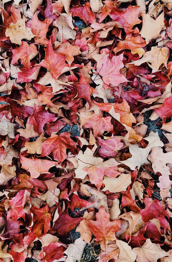 Beautiful picture of Autumn leaves
