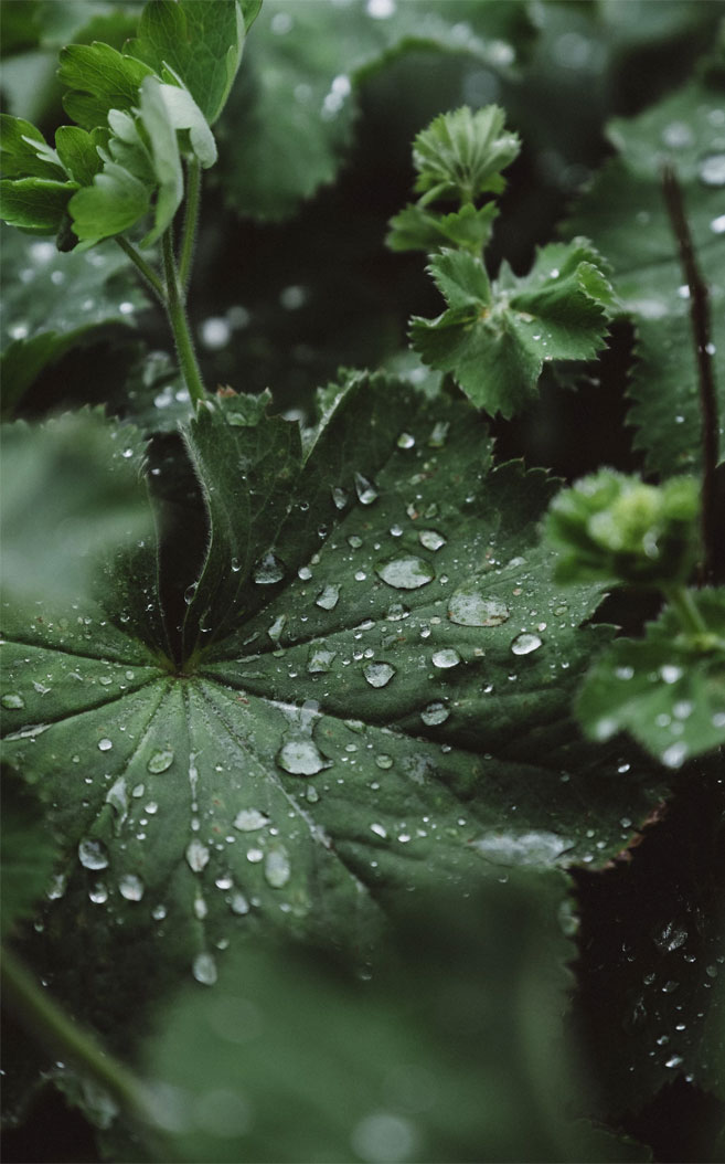 Green leaves + rain