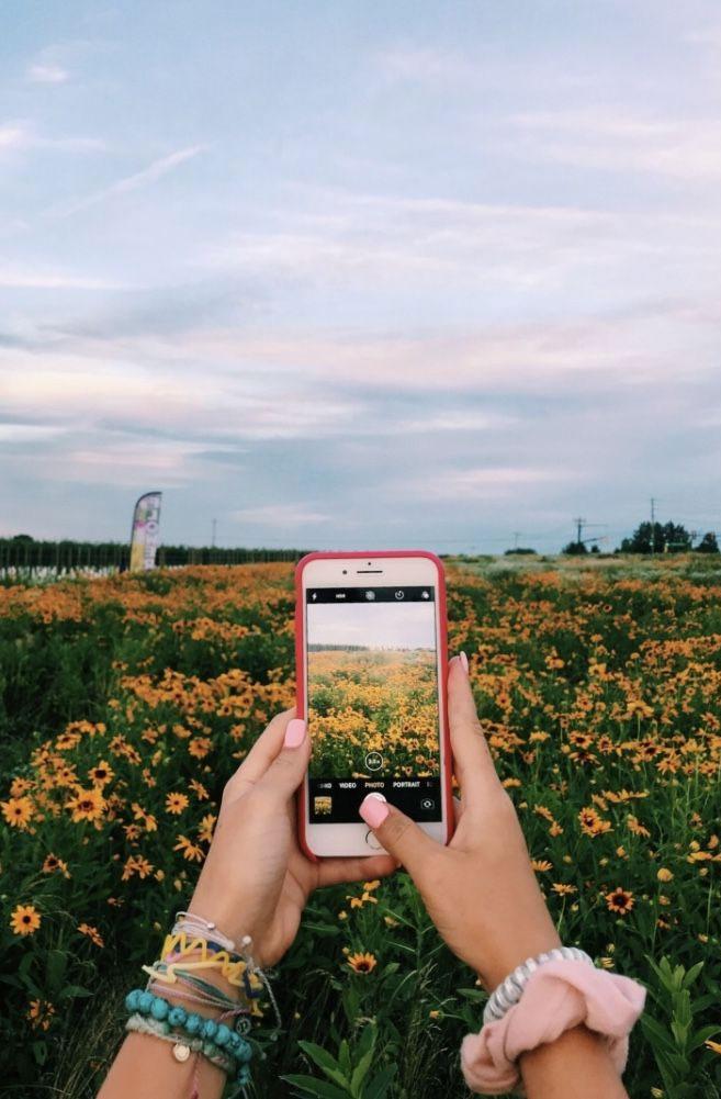 Field of beautiful sunflowers