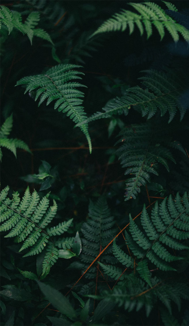 Beautiful fern leaves