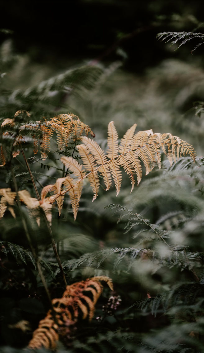 Beautiful Fern Golden Leaves