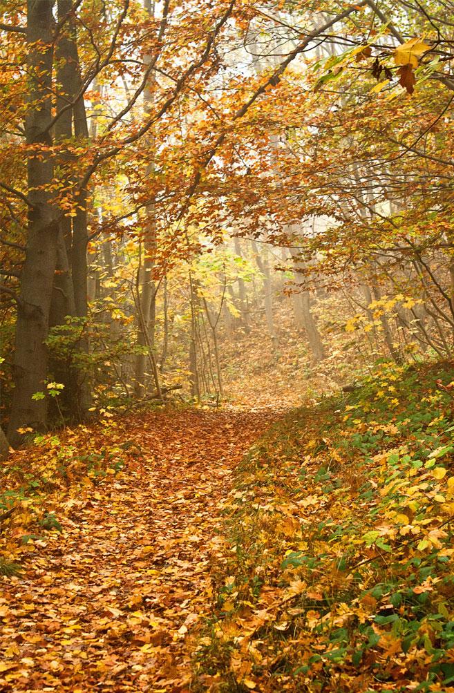 Beautiful yellow autumn leaves