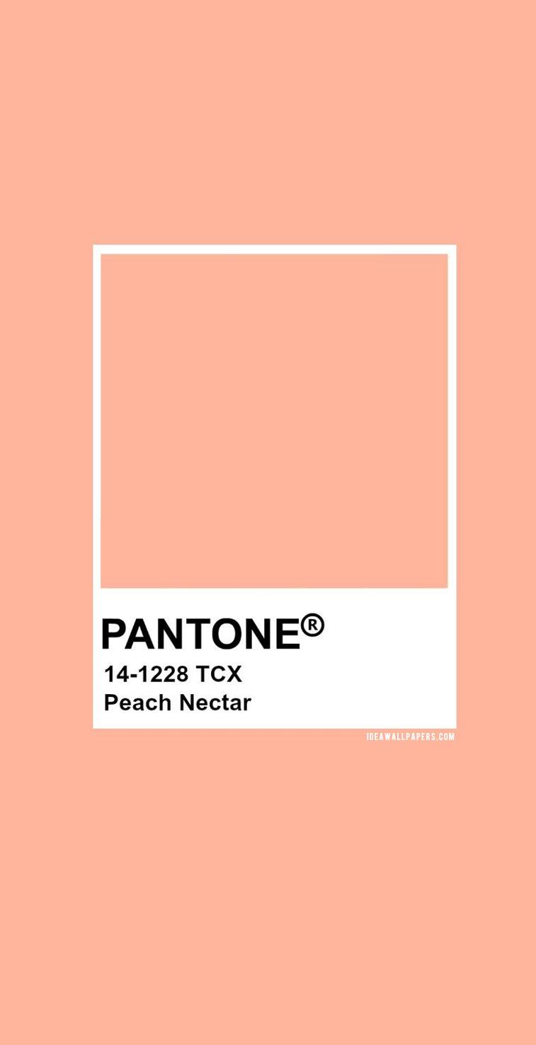 Pantone Peach Nectar : Pantone 14-1228