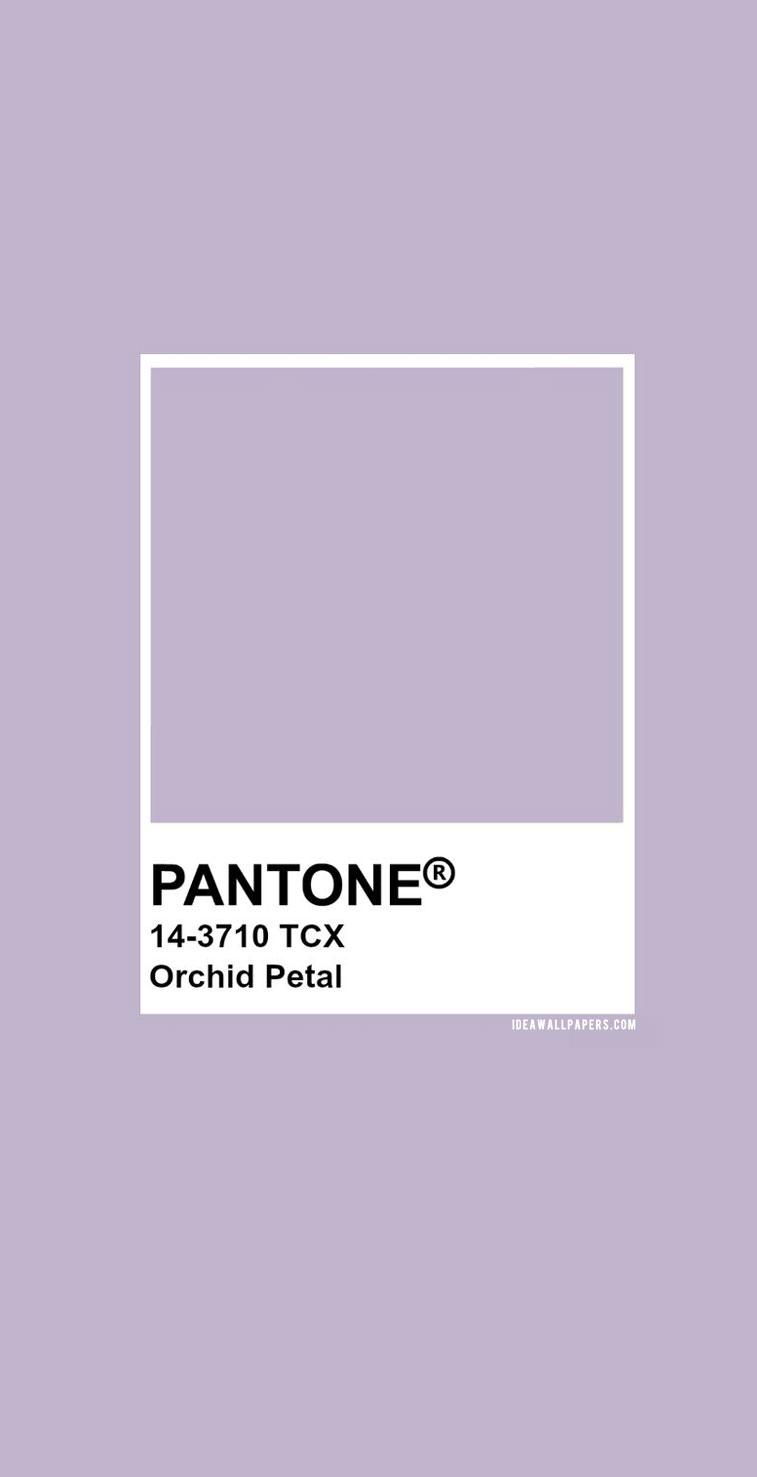 60 Pantone Color Palettes :  Pantone Orchid Petal