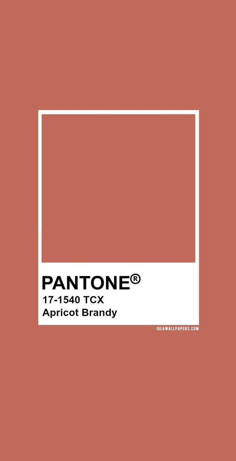 Pantone Apricot Brandy : Pantone 17-1540