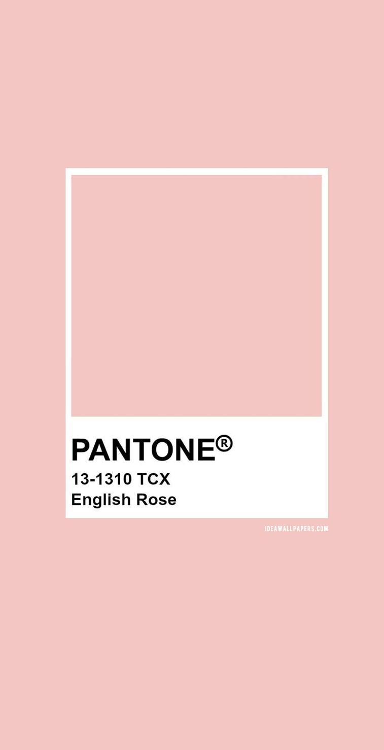 Pantone English Rose : Pantone 13-1310