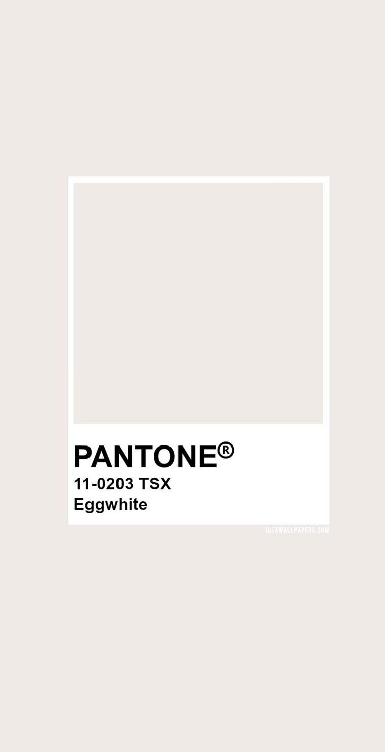 Pantone Eggwhite : Pantone 11- 0203