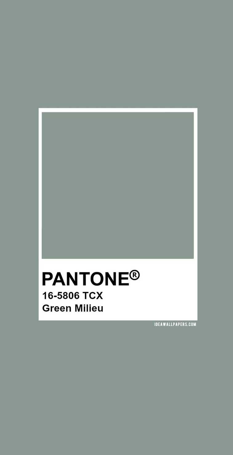 Pantone Green Milieu : Pantone 16-5806