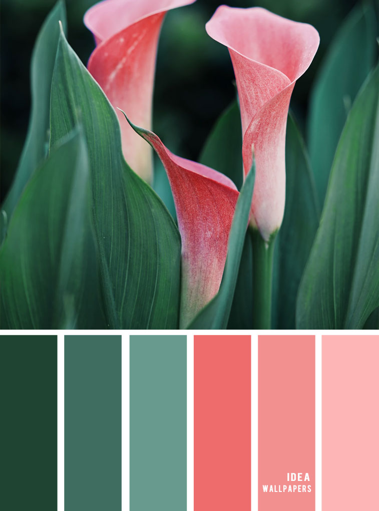 Color Inspiration : Green and Coral color palette