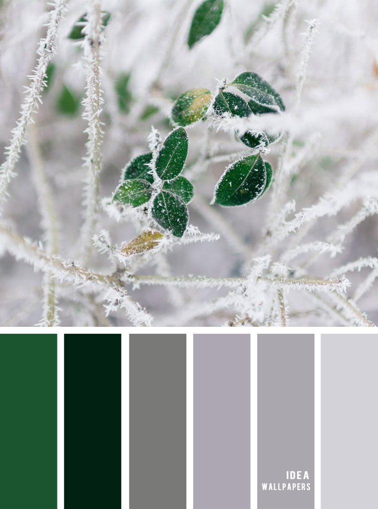 Winter Colour Inspiration : Grey and green color combos