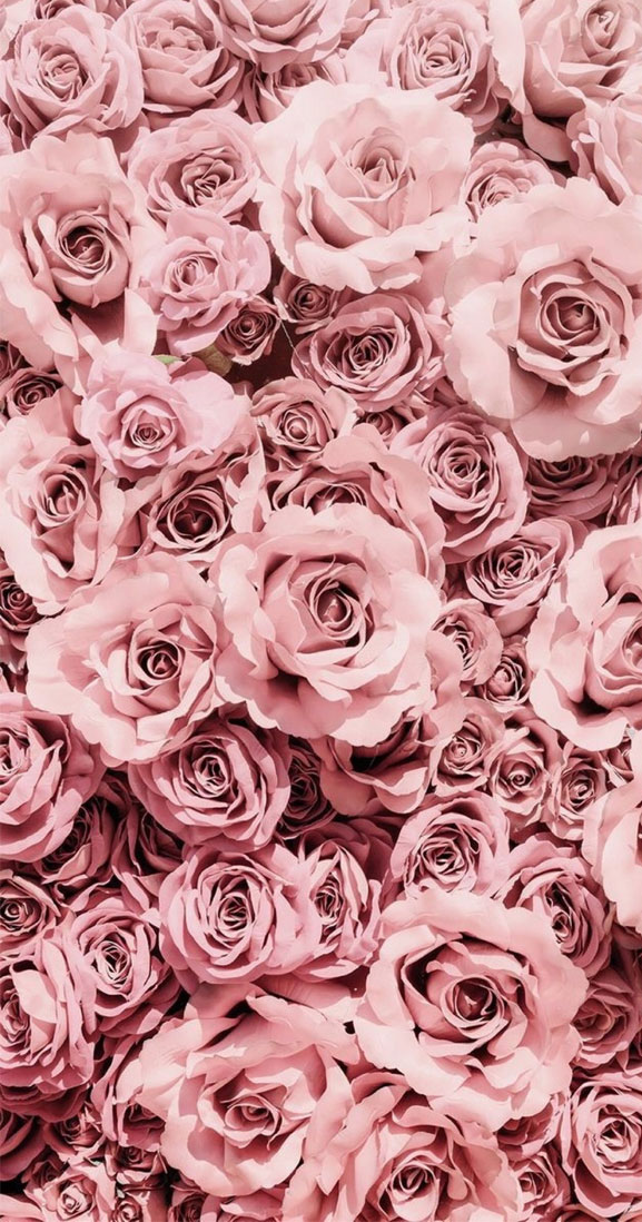 Pretty pink mauve roses