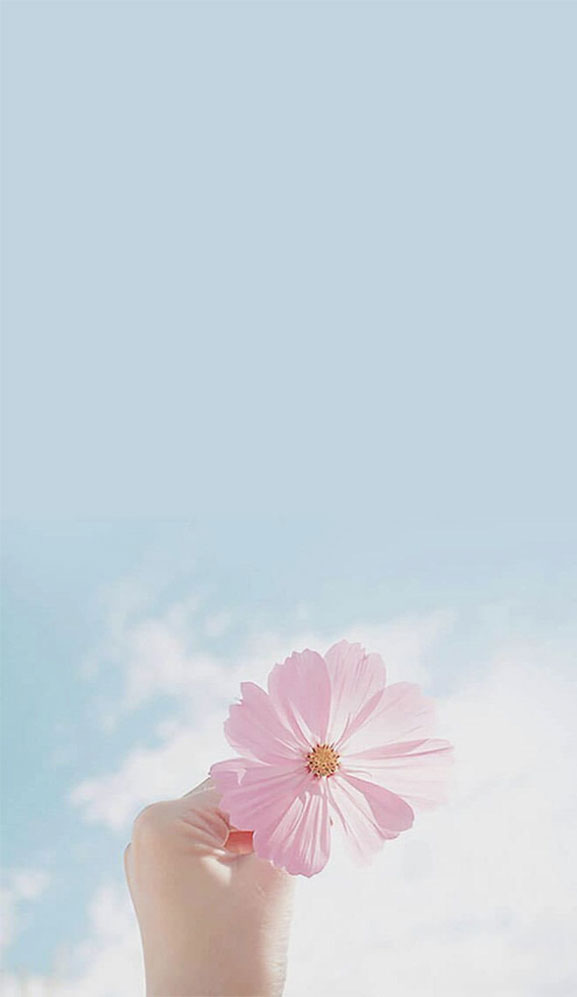 Beautiful blue sky and pink flower