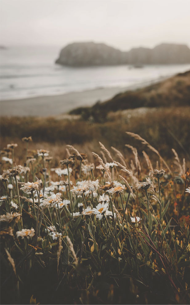 Pretty daisies + beach