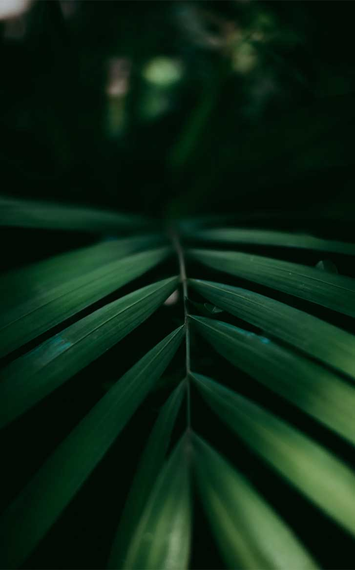 Eye pleasing leaf wallpaper