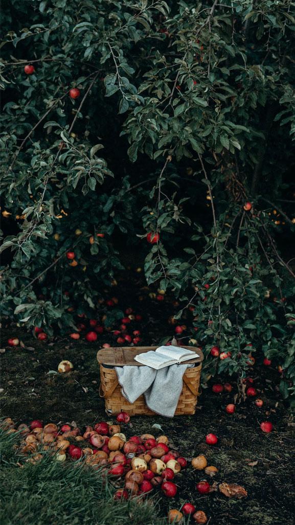 Apples + autumn