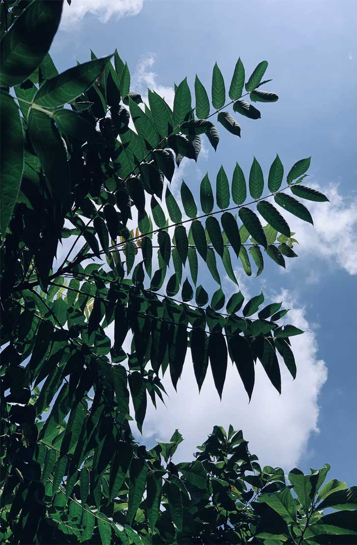Bluesky and green leaves – very relaxing iphone background