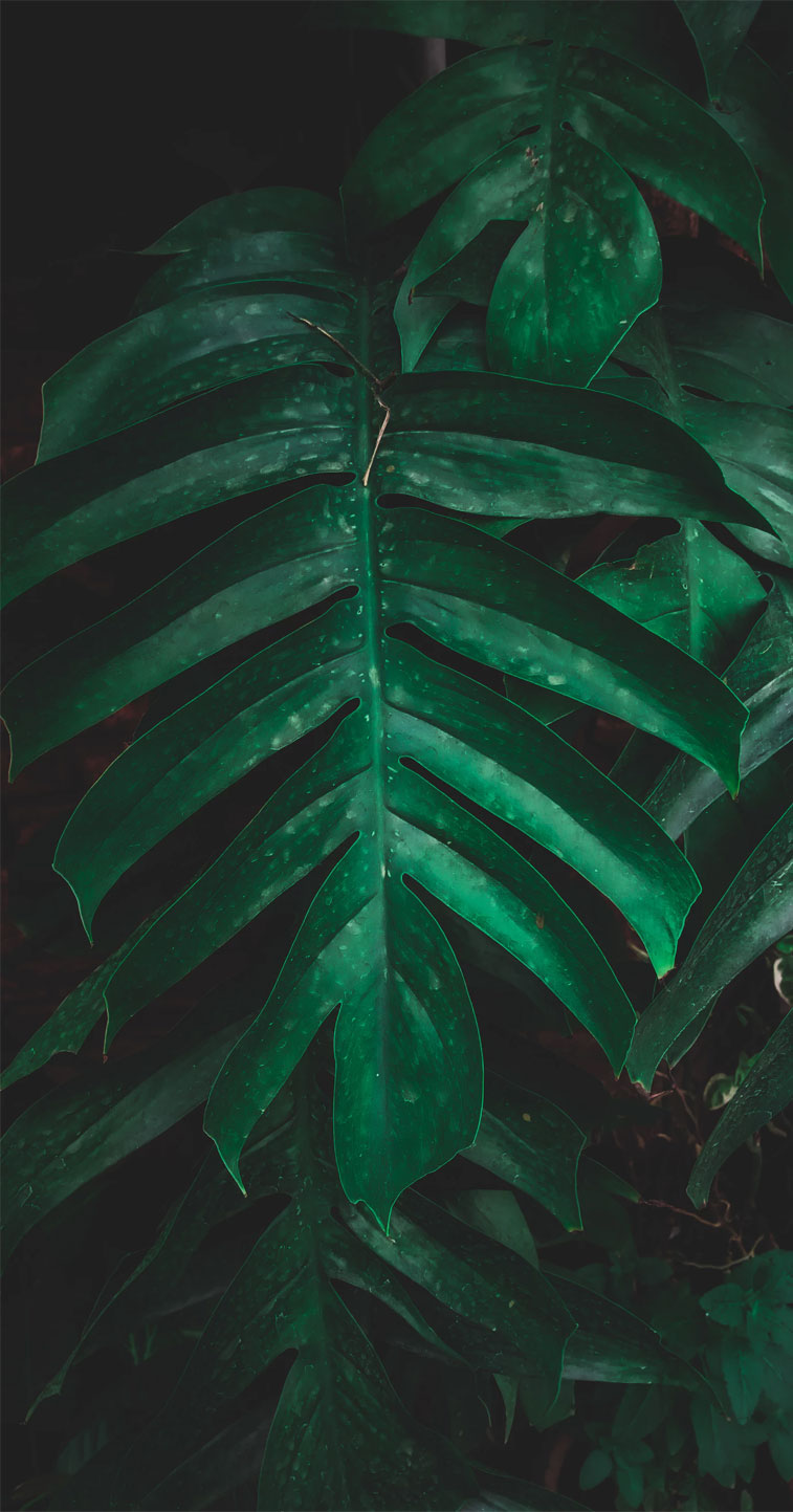 Green tropical leaves – Eye pleasing background