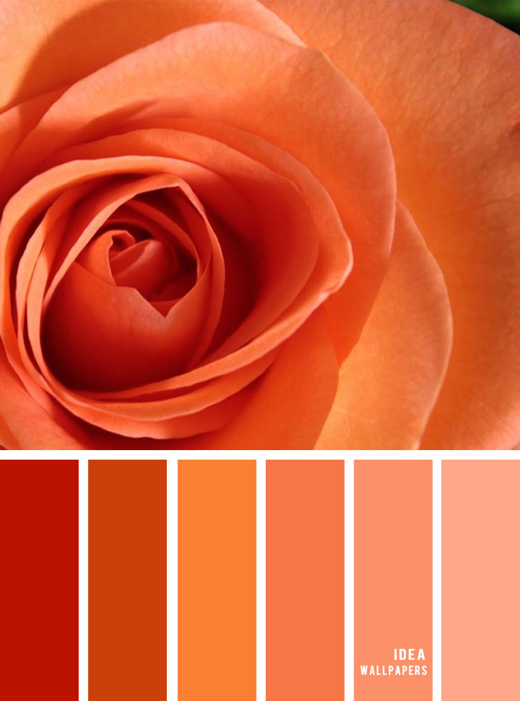 Colour Inspiration : Orange and peach color palette