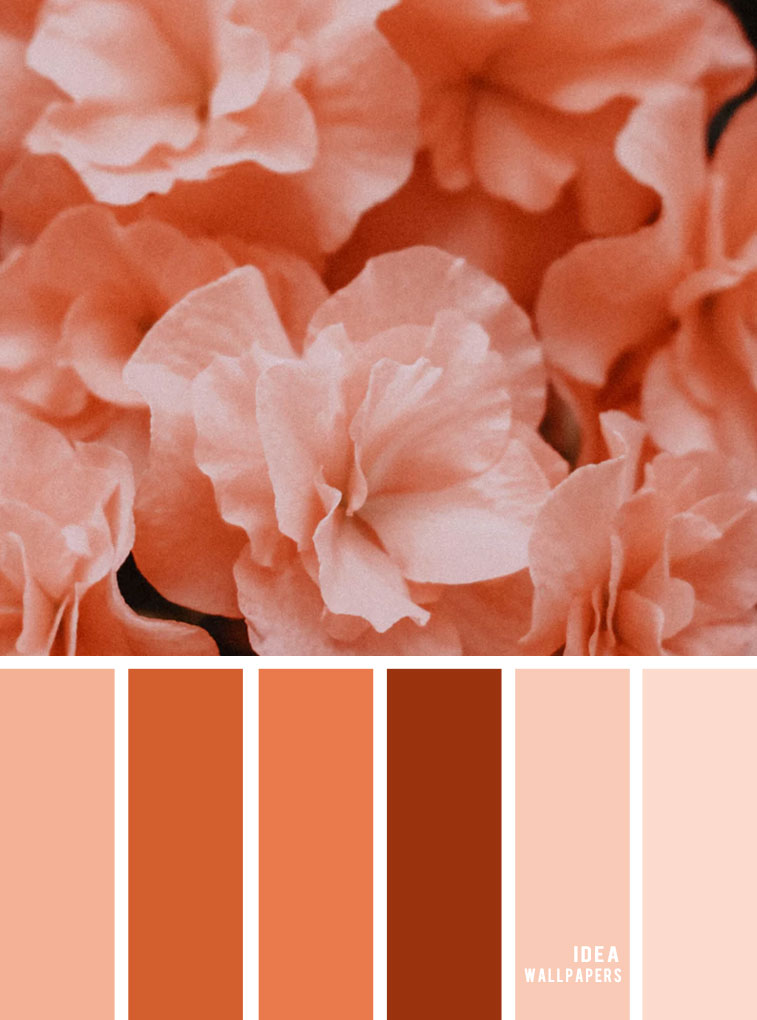 Color Inspiration : Peach Hues