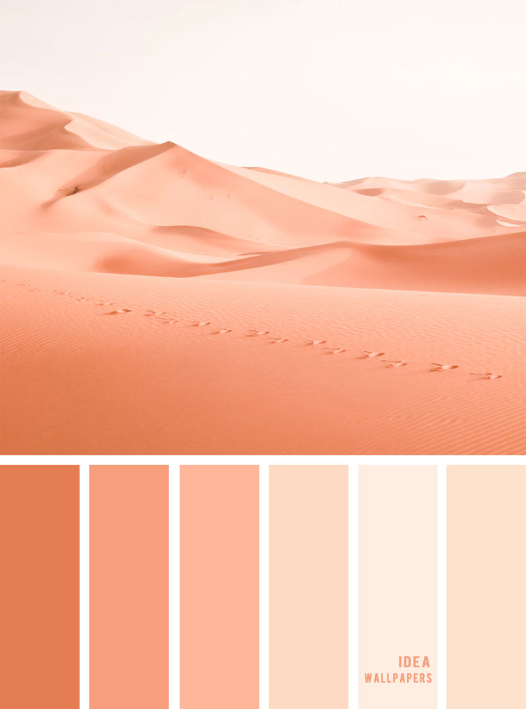 Color Inspiration : Peach Sand Color Palette