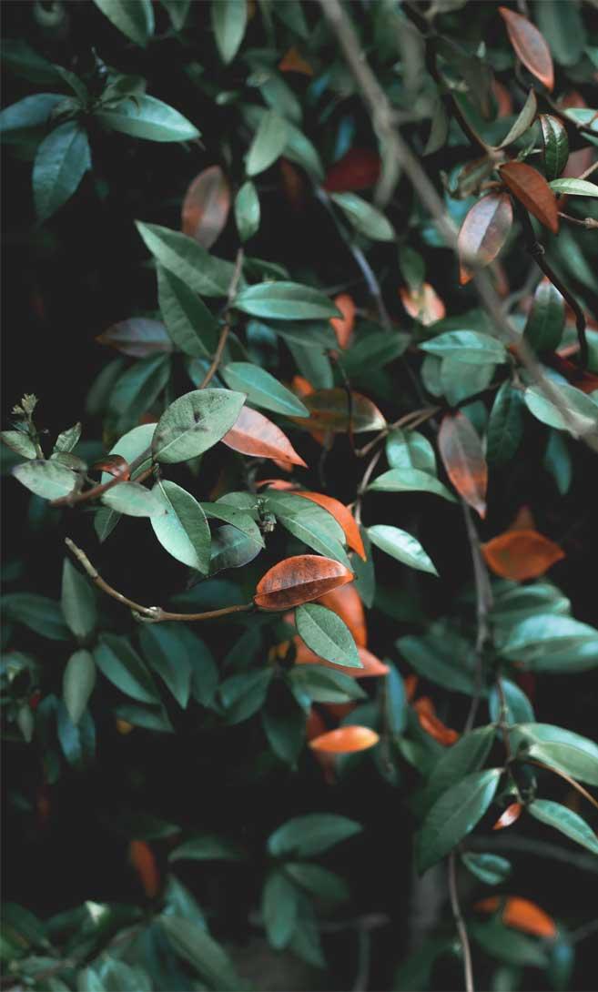 Eye pleasing leaf Photo