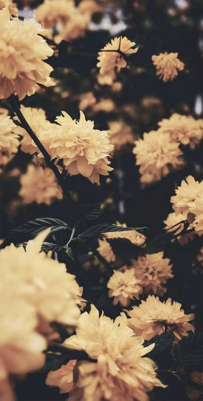 Yellow flowers – I love Summer