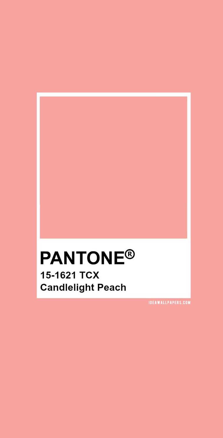 60 Pantone Color Palettes :  Pantone Candlelight Peach : Pantone 15-1621