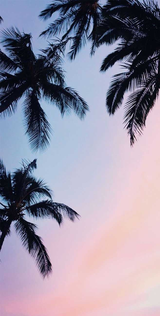 Palm trees mauve sky