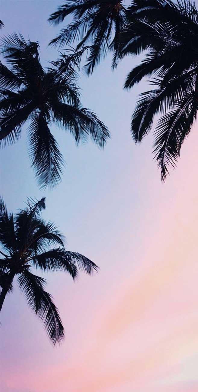Palm trees mauve sky