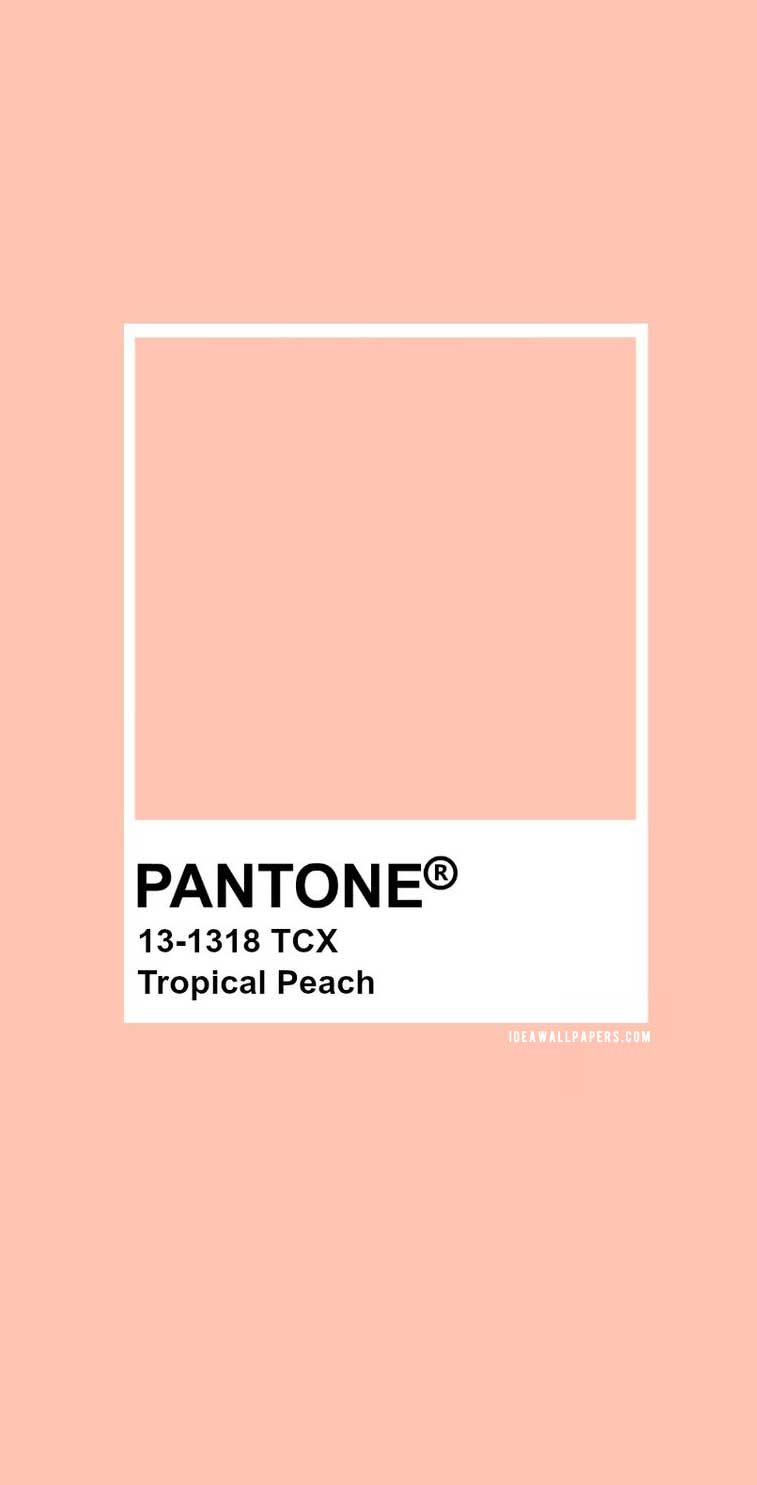 60 Pantone Color Palettes : Pantone Tropical Peach : Pantone 13-1318