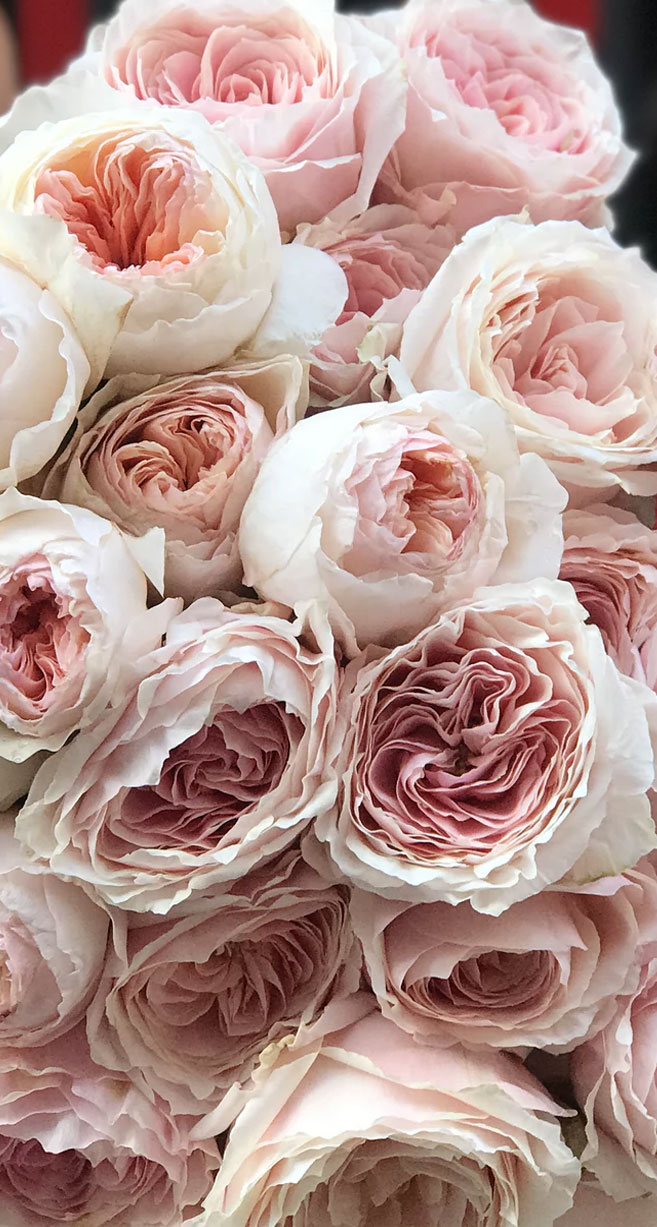 Gorgeous blush Peonies & David Austin Roses