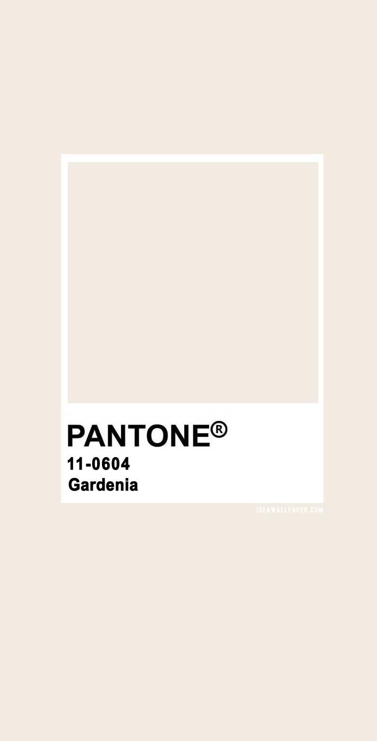 Pantone Gardenia 11-0604