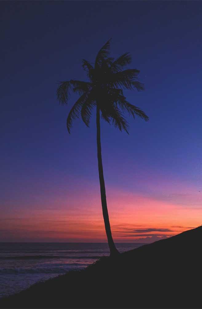 Coconut tree indigo and orange sky