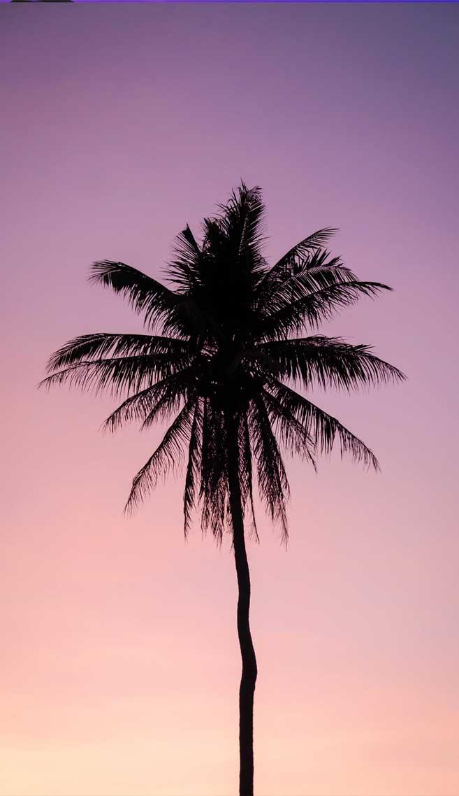 Beautiful pink mauve sky
